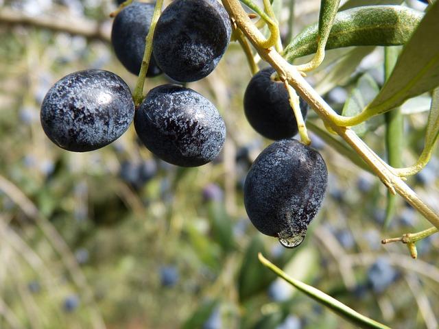 Camera di Commercio di Brescia, incentivi alle imprese olivicole