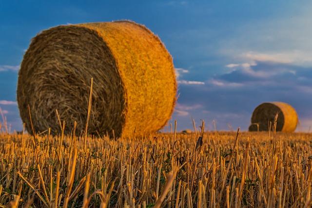 Andamento positivo dell'economia agricola