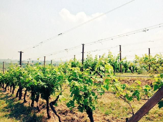 CRIF Ratings – Wine Monitor Nomisma: anche per il 2016 si riduce il livello di rischiosità delle imprese vinicole