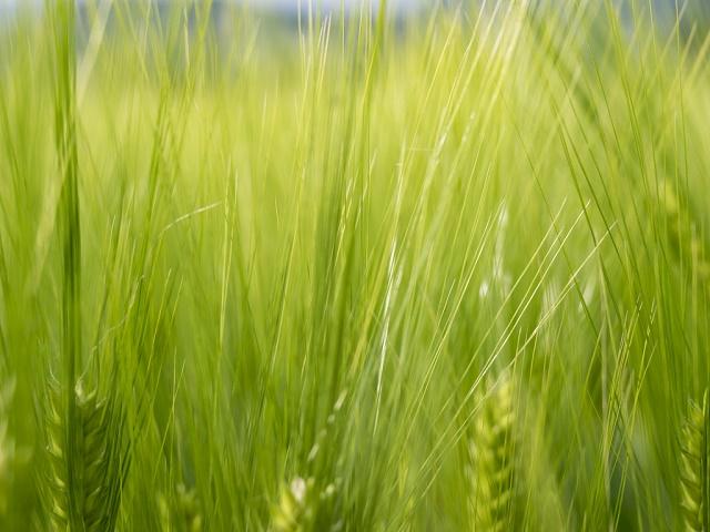 Italia prima nell'Ue in agricoltura per valore aggiunto