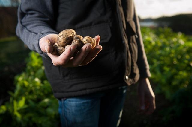 Piemonte, Premio per l'insediamento di giovani agricoltori