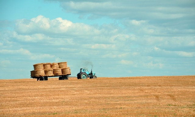 Agricoltura: nel 2018 +0,6% produzione e +0,9% valore aggiunto in un anno