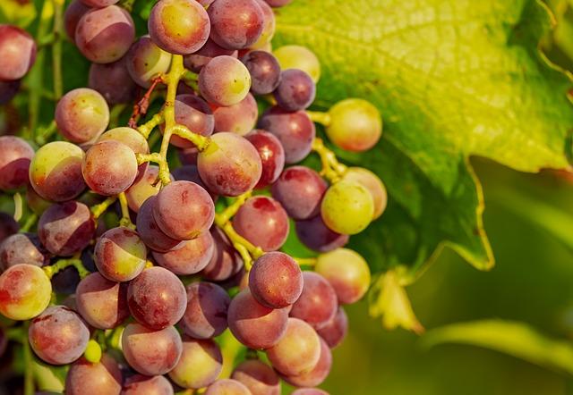 Vino: prezzi all'ingrosso giù del 10% per l'abbondante uva del 2018