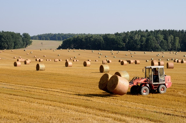 Istat: oltre 1,5 milioni le unità economiche che svolgono attività nel settore agricolo
