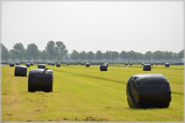 """Parte """"Fields"""", il più grande progetto formativo europeo per l'agroalimentare. Italia capofila con Confagricoltura e Università di Torino"""