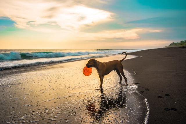"""Come realizzare una Dog beach con i finanziamenti """"Resto al sud"""" di Invitalia"""