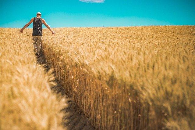 Officinamps: per le aziende agroalimentari serve investire in innovazione e sostenibilità per uscire dall'emergenza