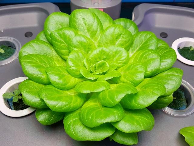 AgriFuture, aperto il contest dedicato alle imprese dell'agroalimentare
