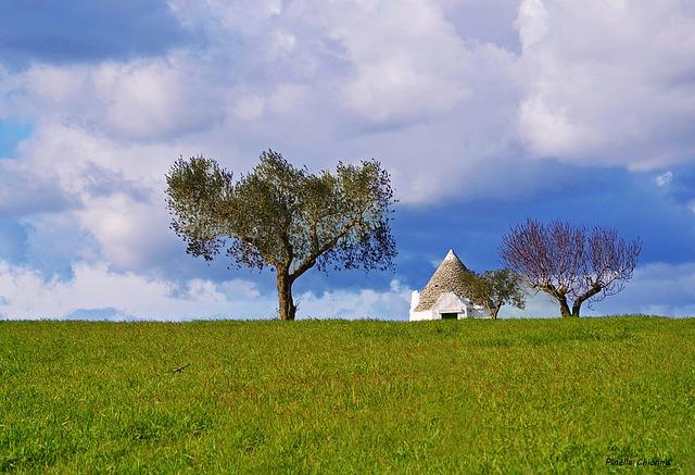 Puglia, contributi alla produzione agricola locale