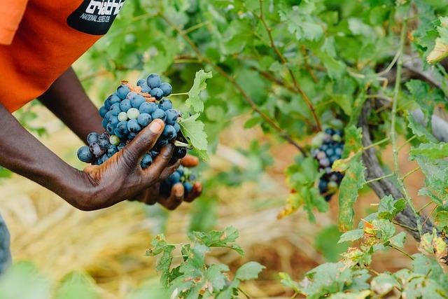 Lavoro: in agricoltura 18.000 stagionali in meno nel 2020 (-1,9%), perse 2 milioni di giornate lavorate (-2,4%)