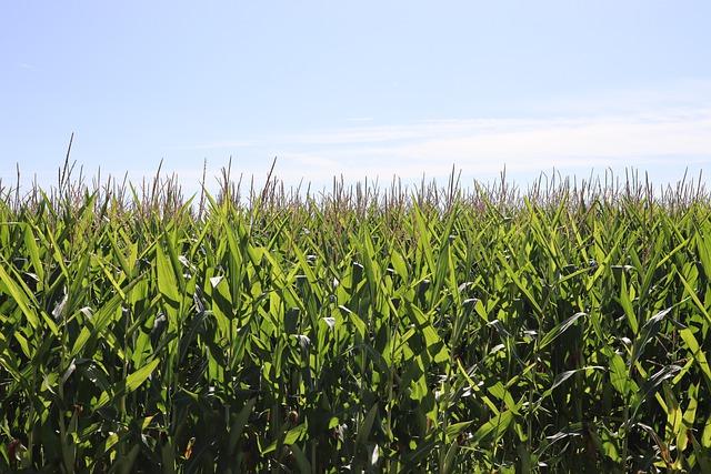 Nuovo bando Confagricoltura-JTI Italia: 120 mila euro per finanziare progetti di agricoltura sociale. Candidature fino al 15 luglio 2021