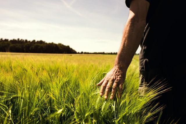 """L'agricoltura """"batte"""" il Covid: nel 2020 il valore della produzione nazionale cala meno dell'un per cento"""