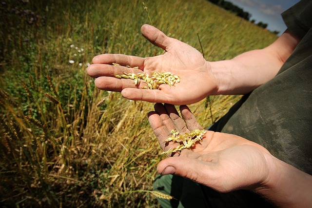 Bando Agricoltura Sociale: in palio 120.000 euro. Scadenza il 15 ottobre